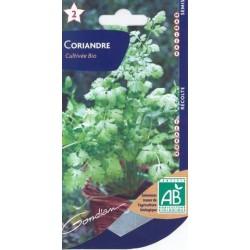 Coriandre cultivé bio