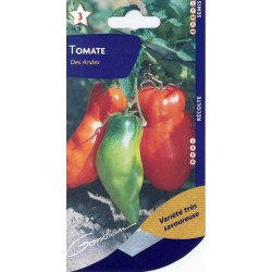 Tomate des Andes ( Andine...
