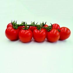 Tomate TANKINI HF1