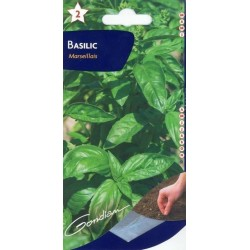 Basilic marsellais