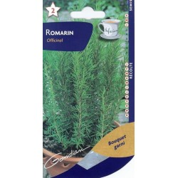 Romarin officinale