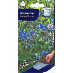 Bourrache officinale